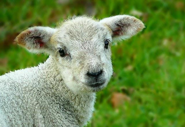 なんでAUDを羊と呼ぶの画像